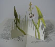 Flowers-of-Marsh-and-Stream-2