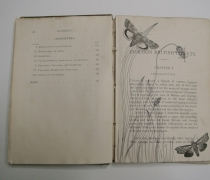 British Insects (1)